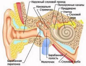 Жидкость во внутреннем ухе
