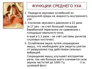 Функции улитки в ухе человека