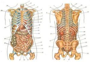 Боль между ребрами справа спереди