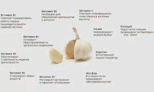 Сколько чеснока можно есть в день