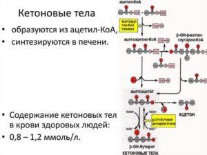 Кетоновые тела в крови