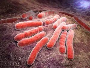 Туберкулезная палочка размножение
