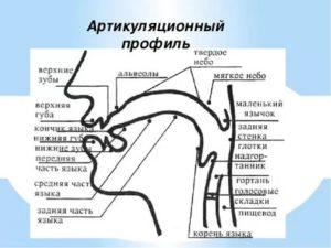 Альвеолы во рту где находятся