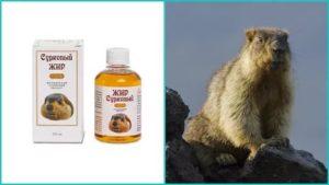 Сурковый жир лечебные свойства и противопоказания