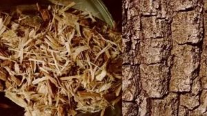 Кора дуба при аденоидах у детей