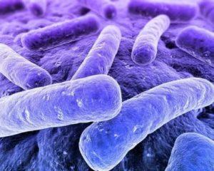 Туберкулёзная палочка это бактерия
