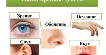 Зрение слух обоняние осязание вкус одним словом
