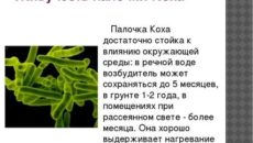 Сколько живет туберкулезная палочка в помещении