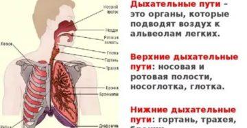 Что относится к верхним дыхательным путям