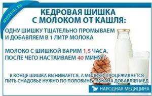 Кедровая шишка в молоке от кашля