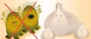 Чеснок убивает микробы