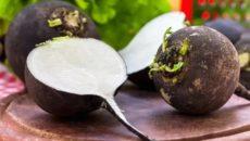 Чёрная редька польза и вред рецепты приготовления